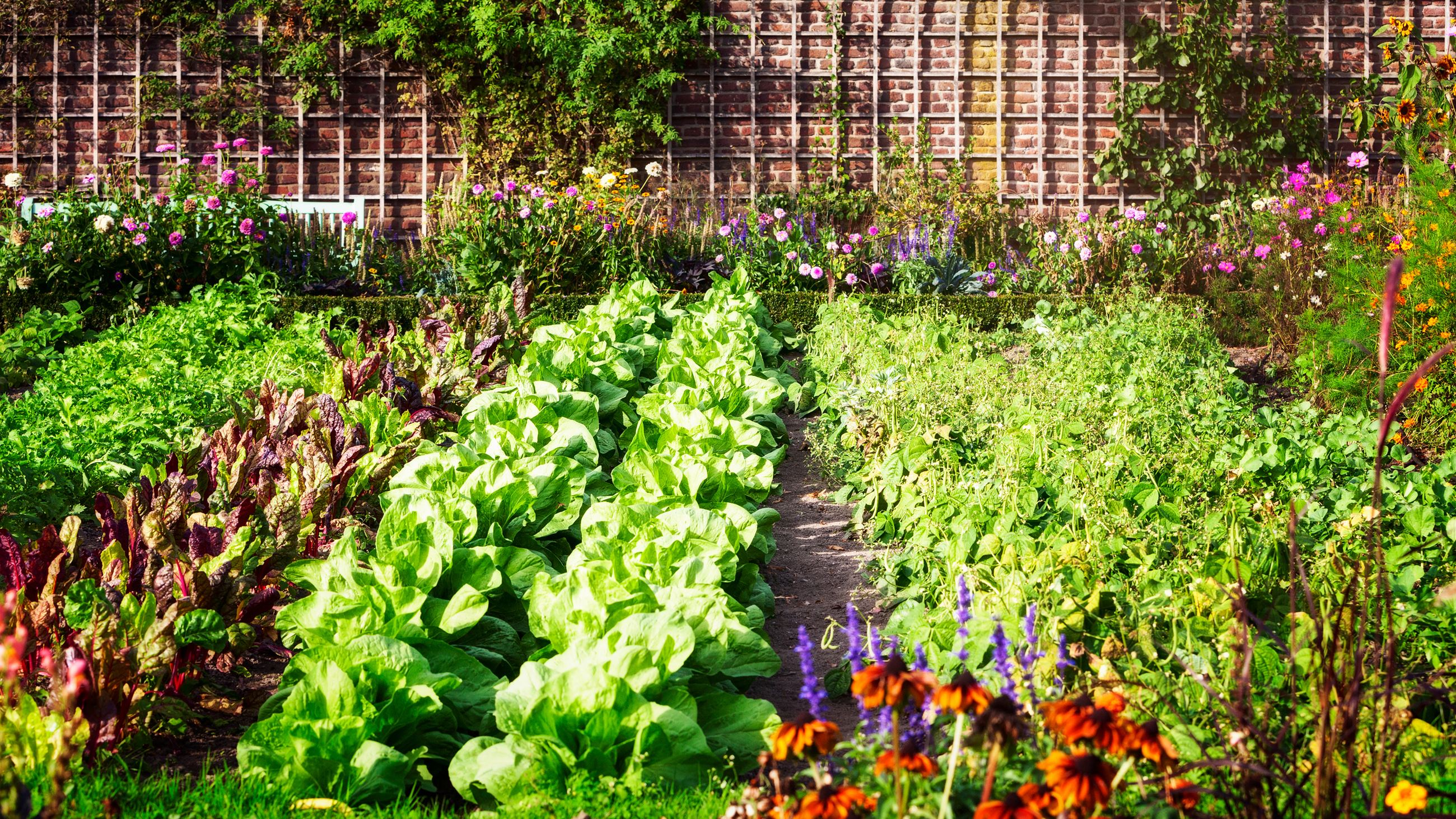 bigstock-Vegetable-Garden-In-Late-Summe-256424179